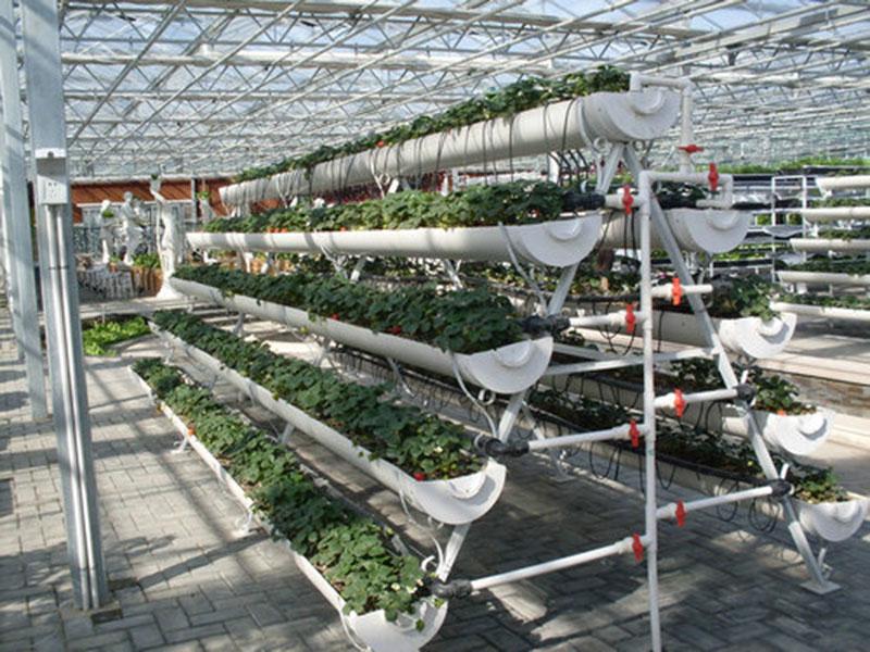 无土栽培育苗苗床千赢国际官网自动化