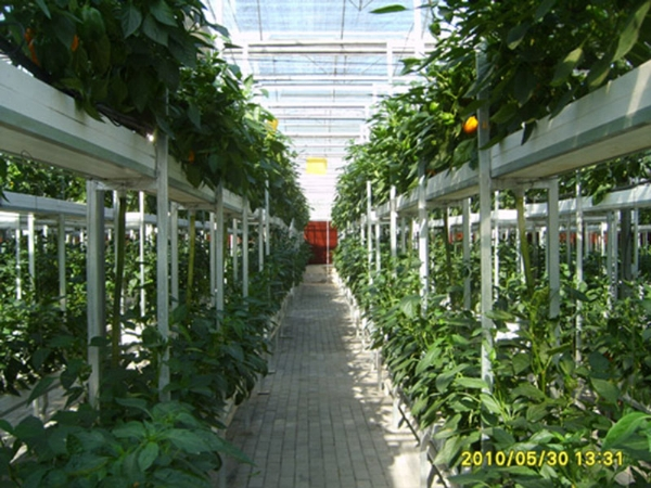 多段多层密式栽培