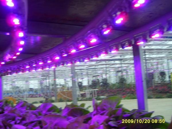 LED植物生长灯头